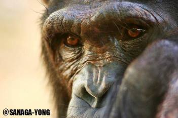 Sanaga-Yong Chimpanzee Rescue Centre in Cameroon