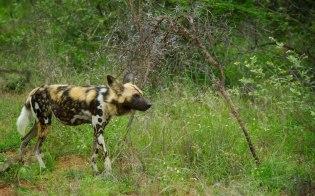 Skukuza, KNP - (Chris Martin Wildlife Photography)