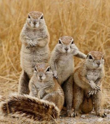 Squirrel gang