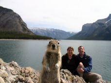 squirrel-portrait-banff-081309_3643_990x742