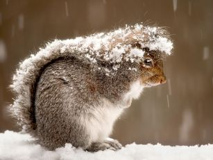 squirrel-snow-storm_47916_990x742