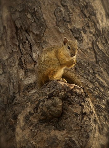 Tree squirrel on Masasa - Londolozi