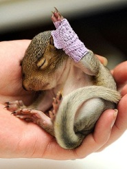 Violet the rescued baby squirrel