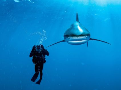 whitetip-shark-bahamas-skerry_41144_990x742