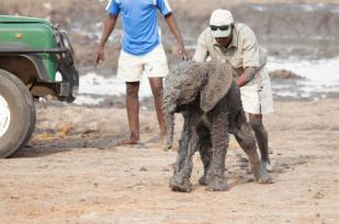 c1 He kept trying to come back to the landrover as anything big to him, could be mum. — at Camp Hwange Zimbabwe.