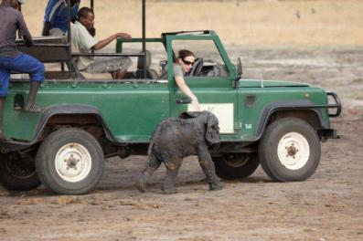 e We were trying to get him to follow the car to so that his mum could see he was out... — at Camp Hwange Zimbabwe.