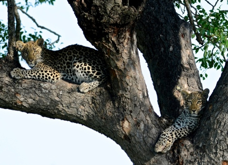 017-Ximpalapala-Cubs