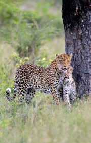026-Vomba-Female-Cub