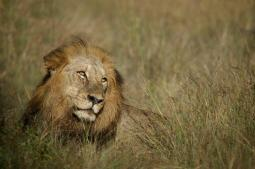 A Picture of Majesty - Chris Martin Wildlife Photography