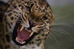 Angry by Kelly Okavango