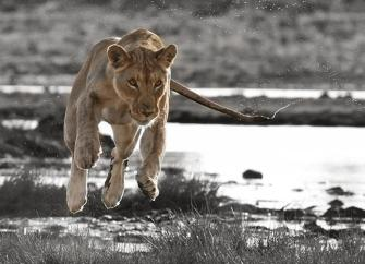 awesome shot by Frederick -Photo Taker- van Heerden