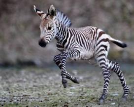 Baby on the run