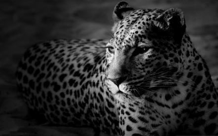 Black n White Portrait - Kelly Okavango