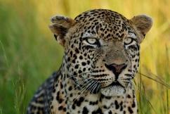 blog-Keshane-3-3-Singita-Face-1-of-1