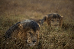Bloody rain..... Photograph by Michael Nichols