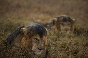 Bloody rain..... Photograph by Michael Nichols