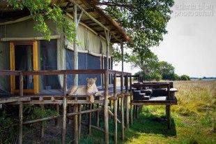 Busanga Plains, Kafue National Park, Zambia by Dana Allen - PhotoSafari