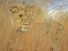 Camouflage - Kelly Okavango