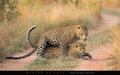 Captured this special moment at Singita Sabi Sand.