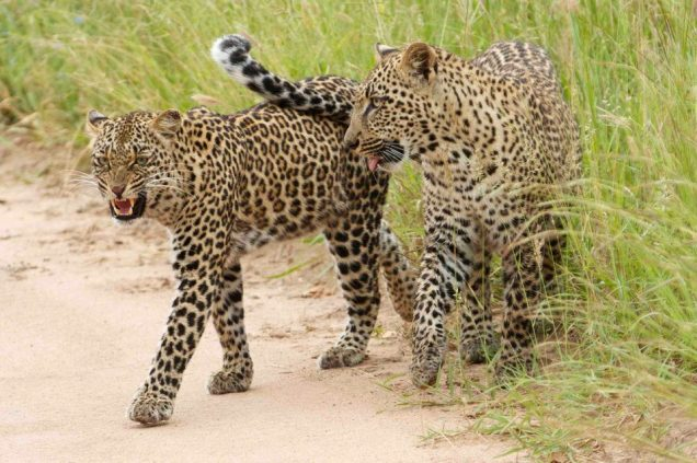 Chitwa Chitwa ee Thandi and cub