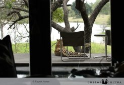 Chitwa honeymoon guest Rupert Haines grabs a shot of a leopard on the deck of his Suite - by Rupert Haines