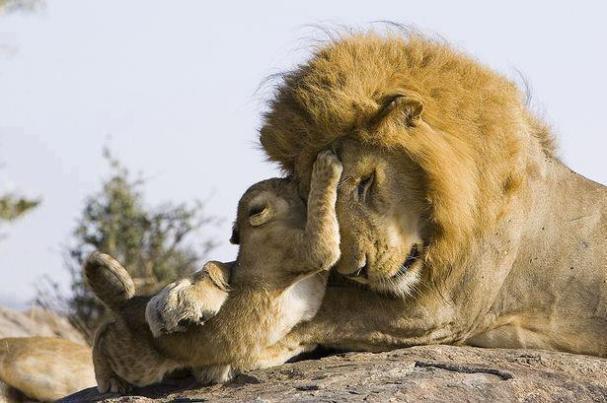 Cub and Dad