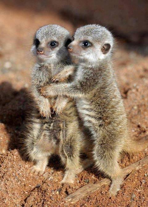 Cuddling mates