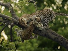 Falling child - Kelly Okavango