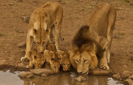 Family drink - Photo by Dana Carr