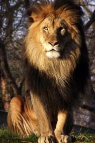 His Majesty II