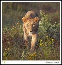 Image © Gerry van der Walt 2011