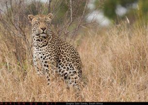 INGWE by Marlon du Toit Photography