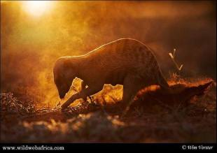 Just love this meerkat photo from Wim Vorster.