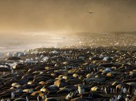 king-penguins-and-elephant-seals_28390_990x742