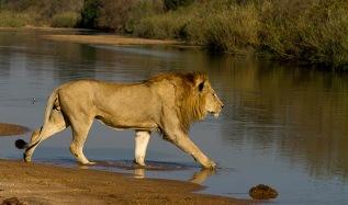 majingi-in-water-at-finfoot