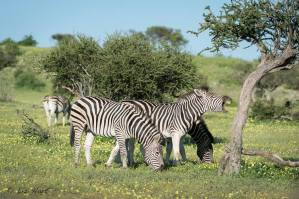 Mashatu Game Reserve