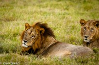 Mmamoriri – is very special. She has a dark, full mane, making her appear to be a male!