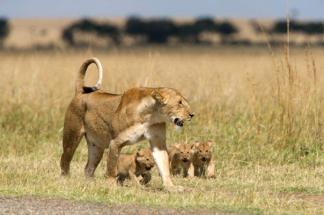 Mum and cubs - Njeri Gichobi