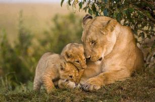 Mum and cubs