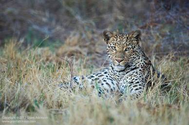 Okavango - Atkinson Photography and Safaris