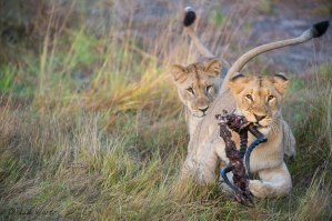 Photographed at Phinda Forest Lodge