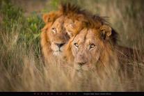 Preparing for the night hunt - Marlon du Toit Photography