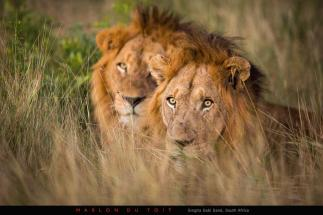 Preparing for the night hunt - Marlon du Toit Photography