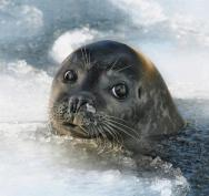 Pup in ice - A Million Beautiful Pictures