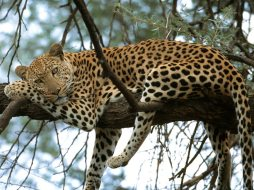 Resting by Kelly Okavango