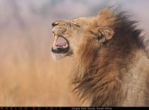 Singita Sabi Sands 2 - Marlon du Toit Photography