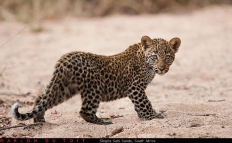 Singita Sabi Sands - Marlon du Toit Photography