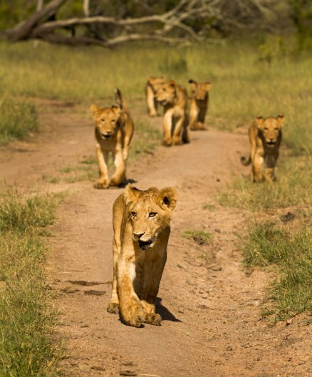Sparta cubs