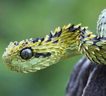 Spikey snake - Kelly Okavango