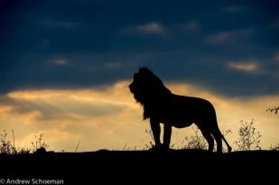 Sunrise by Andrew Schoeman Photography